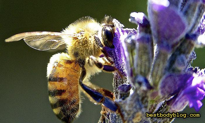 Мёд - это результат жизнедеятельности пчёл