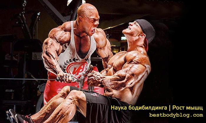 Наука бодибидинга | Рост мышц