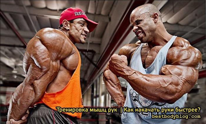 Тренировка мышц рук. Как накачать руки быстрее?
