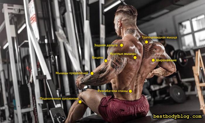 В тяге нижнего блока работает множество мышц