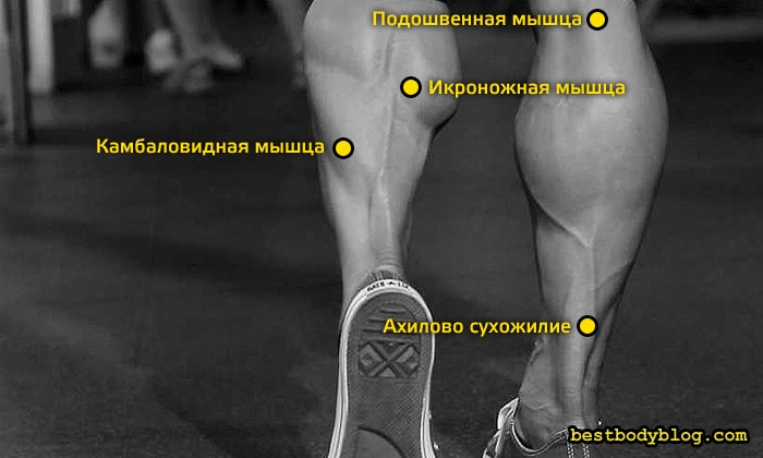 Чтобы накачать голень, особое внимание нужно уделять камбаловидной мышце