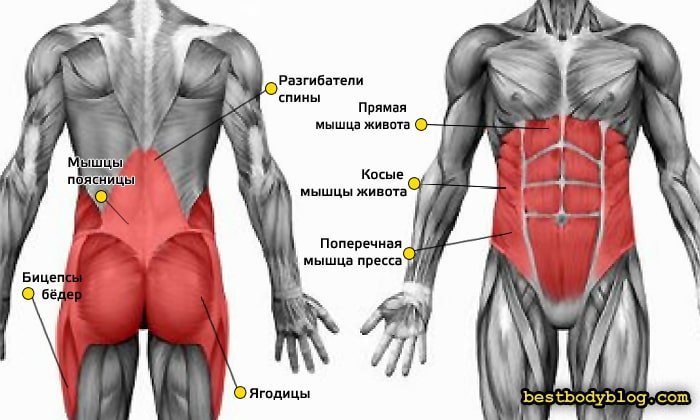 Мышцы кора сосредоточены в основном в центре корпуса