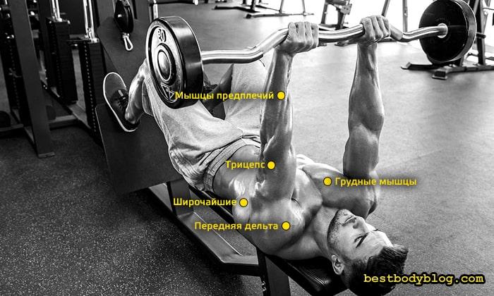 Помимо трицепса, во французском жиме работают также и другие мышцы