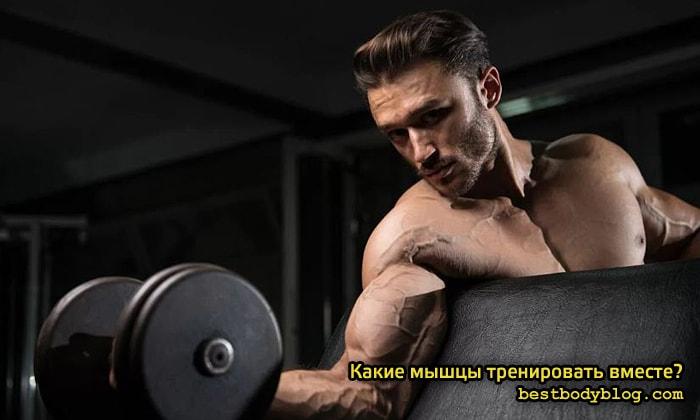 Какие мышцы качать вместе