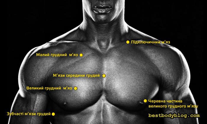 М'язи грудей чоловіка