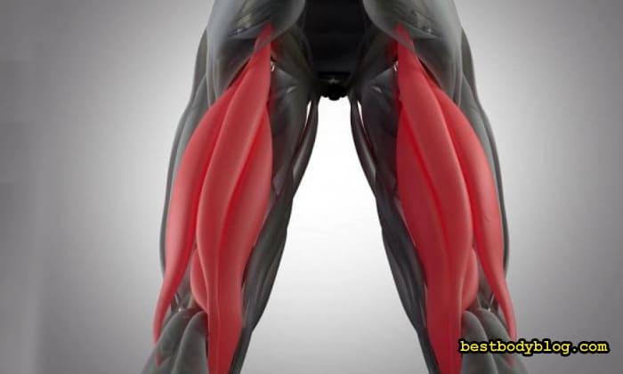 Подколенные сухожилия